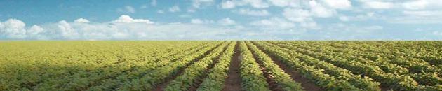 campo agricultura cultivo